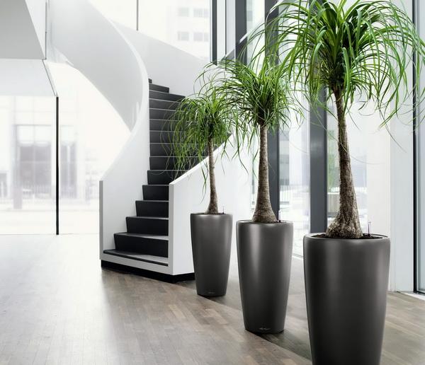 办公室中的绿色植物
